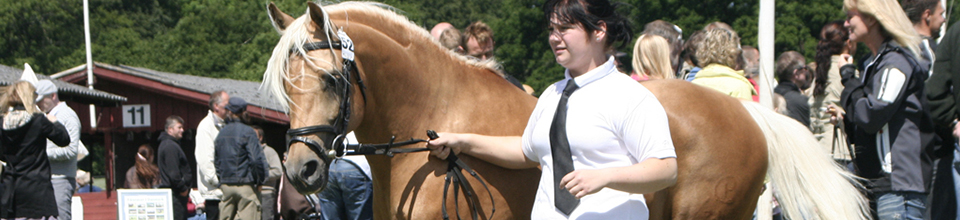 Ponyshow